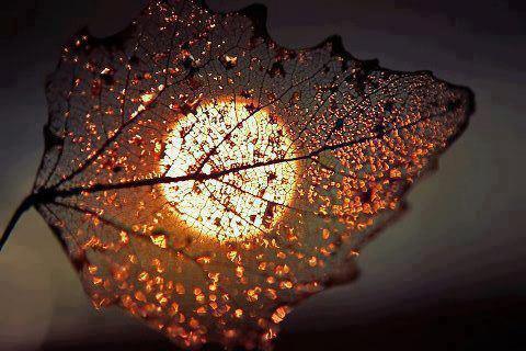 Twilight .     -Khalil Gibran.